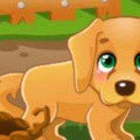 Lost Puppy